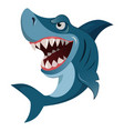 Hungry angry cartoon great white shark wiith big vector image vector image