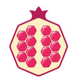 pomegranate cut icon vector image