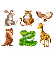Set of different wildlife vector image vector image