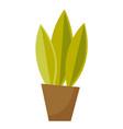 green plant in a pot cartoon vector image