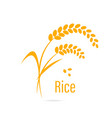 Cereal icon with rice vector image