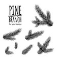 set from fir tree branches template for business vector image vector image