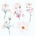 collection cosmos flowers in watercolor style vector image vector image