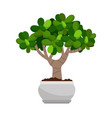 crassula ovata house plant in pot vector image vector image