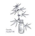 drawing cannabis essential oil vector image vector image