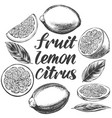 fruit lemon citrus with leaves set isolated on vector image