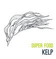 kelp super food hand drawn sketch vector image vector image
