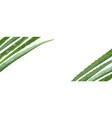 realistic aloe vera on white vector image vector image
