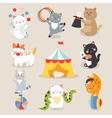 set cheerful circus playing cats vector image vector image