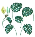 Stylized monstera leaves Decorative image of vector image vector image