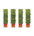 tree wall cube vector image