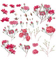 collection pink rose flowers in vintage style vector image