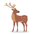 deer with horns in flat design vector image vector image