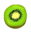 fresh kiwi fruit half isolated colourful element vector image