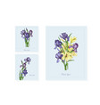 Postcards of iris flowers in color on white backgr