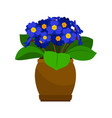 primrose house plant in flower pot vector image vector image