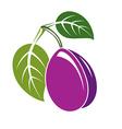 Single purple simple plum with green leaves ripe vector image