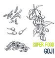 Goji super food hand drawn sketch
