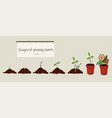 phases of growing plants from seed vector image