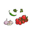 tomato garlic parsley and green chili pepper vector image