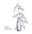 drawing paprica essential oil vector image vector image