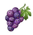 grape with different face vector image vector image