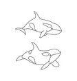 killer whale set outline line art vector image vector image