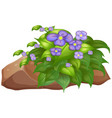 purple flower and rock on white background vector image vector image