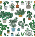 seamless pattern with houseplants growing in pots vector image vector image