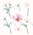set light pink and white cosmos flowers vector image vector image
