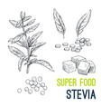 super food hand drawn sketch vector image vector image
