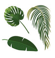 tropical plant leaf set realistic palm leaves vector image vector image
