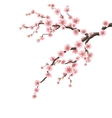 Cherry blossom branch EPS 10 vector image