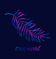 summer night tropic background with palm leaf vector image vector image