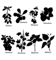Basic Berries Collection vector image