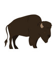 bison isolated on white background graphics vector image