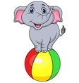 Cute elephant cartoon standing on a colorful ball vector image vector image