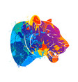abstract predatory cat leopard vector image vector image