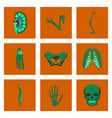 assembly of flat shading style icon human bones vector image vector image