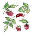 hand drawn raspberry colored sketch watercolor vector image