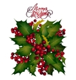 Holly berries design vector image