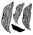 leaf of the pipal vector image