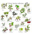 vintage collection hand drawn berries plants vector image vector image