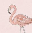FlamingoAkva vector image vector image