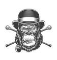 vintage serious gorilla head smoking pipe vector image vector image