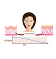 face and two types of skin - aged and young vector image vector image