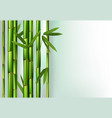 green bamboo trunks background realistic vector image vector image