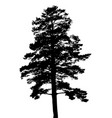 silhouette of fir tree template for business card vector image vector image