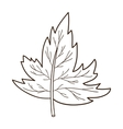 Sketch leaf isolated on white vector image vector image