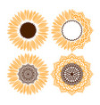 sunflower mandala vector image